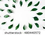 green leaves frame on white... | Shutterstock . vector #480440572