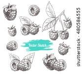 vector raspberries hand drawn... | Shutterstock .eps vector #480586555