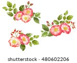 bouquet of rose flowers and... | Shutterstock . vector #480602206