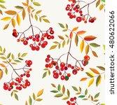 rowan berries seamless autumn... | Shutterstock .eps vector #480622066