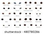 Vector Set Of Cartoon Dog Eyes...