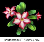 Exotic Pink Flower Drawing On...