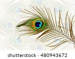 beautiful peacock feathers as