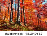 beautiful view of the autumn...   Shutterstock . vector #481040662