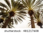 Under Palm Trees