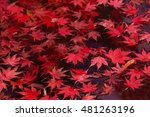 Small photo of Red leaves accumulated in the pond