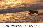 Dog chases a ball in the ocean at sunset - stock photo