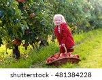 Little Girl Picking Apples In ...