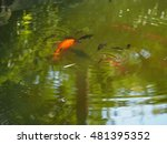 the colorful fishes swimming in ... | Shutterstock . vector #481395352