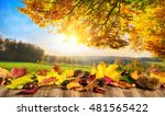 autumn concept with colorful... | Shutterstock . vector #481565422