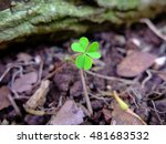 three leaf clover alone in the...   Shutterstock . vector #481683532