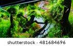 Close Up Image Of Aquarium Tan...