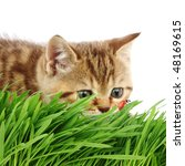 cat behind grass - stock photo