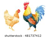 watercolor illustration rooster ... | Shutterstock . vector #481737412