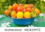 tomatoes | Shutterstock . vector #481819972