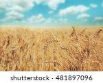 golden wheat ear closeup on... | Shutterstock . vector #481897096