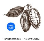hand drawn cocoa beans on white ... | Shutterstock .eps vector #481950082