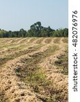 Small photo of Freshly alfalfa on the field.