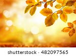 autumn beech leaves decorate a... | Shutterstock . vector #482097565