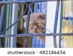 Closeup Of A Cat Sitting Behin...