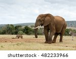 Small photo of The African Bush Elephant - The African bush elephant is the larger of the two species of African elephant.