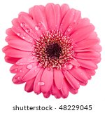 Pink Flower Head Surface Top...