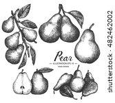 pear   fruit vector element...   Shutterstock .eps vector #482462002
