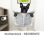 french bulldog dog   sitting on ... | Shutterstock . vector #482480692