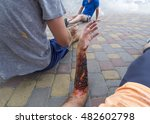 Wounded  Injured During The...
