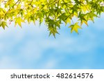maple leaf for background use | Shutterstock . vector #482614576