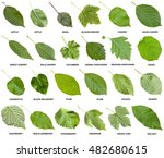 Collage From Green Leaves Of...