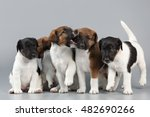 Family Of Purebred Puppies...