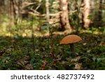 mushroom in the forest  green... | Shutterstock . vector #482737492