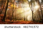 rays of bursting sunlight in a... | Shutterstock . vector #482741572