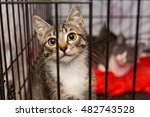 little kittens in a cage of a... | Shutterstock . vector #482743528