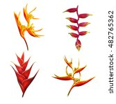 heliconia flower set  bihai and ... | Shutterstock . vector #482765362