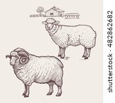 sheep and ram. vector. | Shutterstock .eps vector #482862682