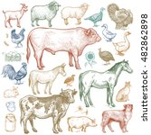 Farm Animals Set. Vector.