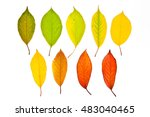 Autumn Leaves Of Cherry Tree...