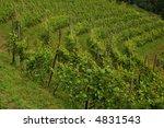 green vineyard in the north of  ... | Shutterstock . vector #4831543