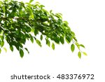 green leaves and branches on... | Shutterstock . vector #483376972