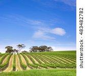vineyard in the clare valley ...   Shutterstock . vector #483482782