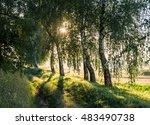 birch grove at dawn | Shutterstock . vector #483490738