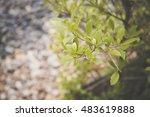 white  gray  orange pebbles... | Shutterstock . vector #483619888