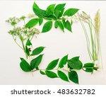 wreath of the jasmine flowers... | Shutterstock . vector #483632782