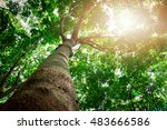 Large  High Tree Tall Tree In ...