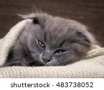 sleepy kitten sleeps in a... | Shutterstock . vector #483738052
