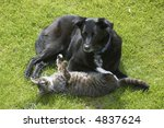 Stock photo a cat and a dog laying on the grass 4837624