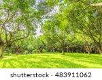 forest   Shutterstock . vector #483911062