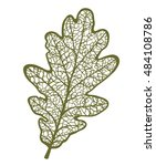vector oak leaf  isolated on... | Shutterstock .eps vector #484108786